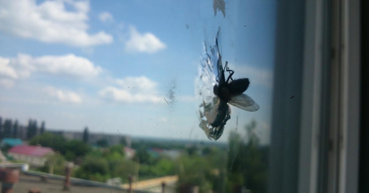 нарядны муха на стекле картинки при желании купить