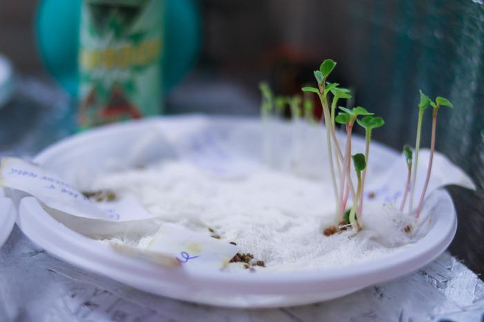 Хобби на зиму - первый гроубокс своими руками Хобби, Гроубокс, Рукожоп, Растения, Гидропоника, Первый пост, Длиннопост