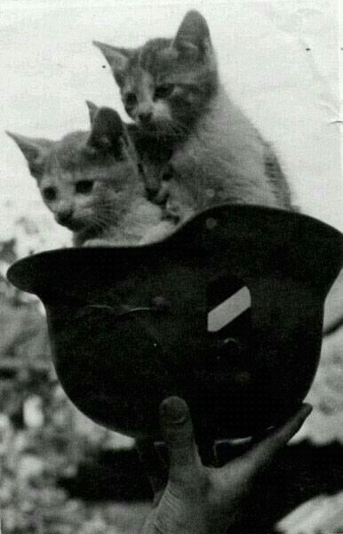 Племена кот подвешивают груз на член