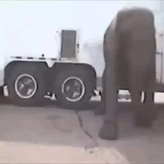 Немного о цирке... Цирк, Гифка, Животные, Дрессировка, Жесть, Люди