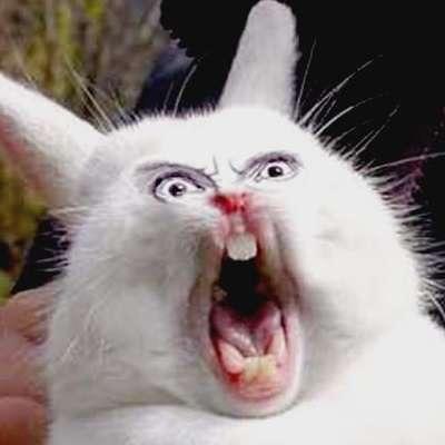 Только что Кот с лампой, Тугодум, Глупость