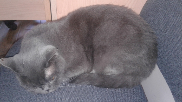 Найдена кошка, ищет старых или новых хозяев. Краснодар, Фестивальный, Найден кот, Длиннопост, Кот, Помощь