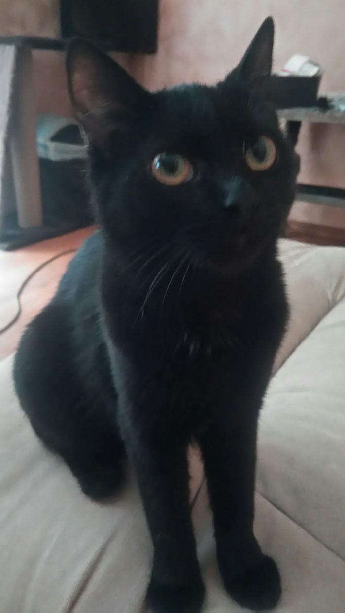 Помогите разобраться с кошкой это обман фотошоп-или так бывает Кот, Фотошоп мастер, Длиннопост