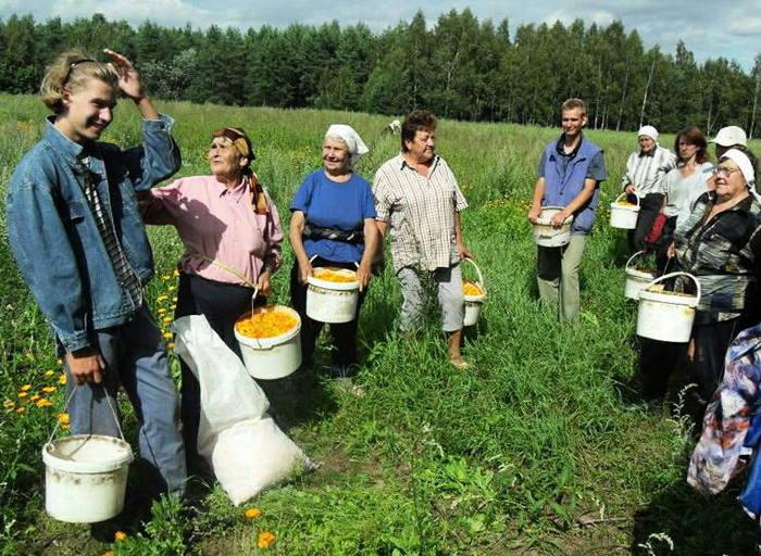 Жители Мядельщины заработали тысячи долларов на сборе лекарственных растений Agronews, Чай, Беларусь, Деньги, Лекарства, Фитотерапия, Бизнес, Длиннопост