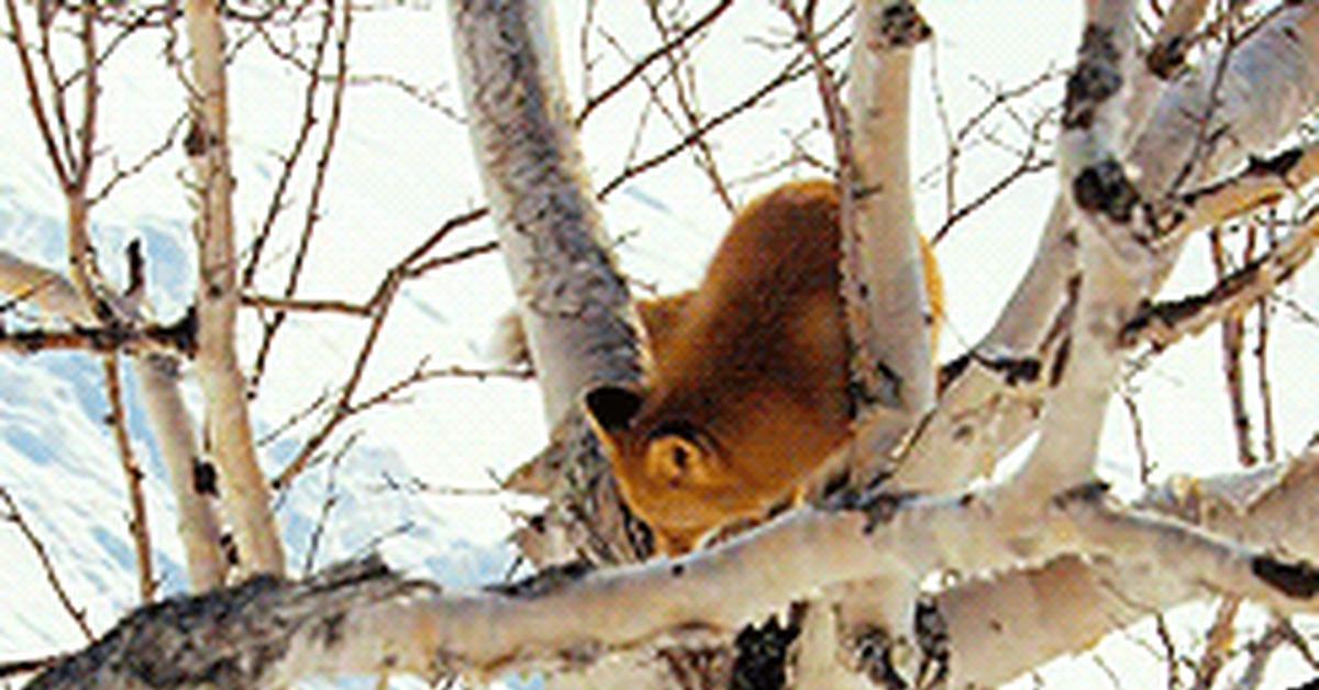 Картинки лисы анимация зимой, прикольные картинки