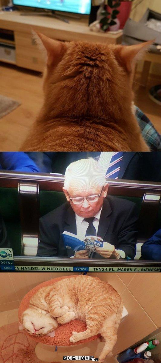 Когда хочется посмотреть котиков во время заседания Польша, Кот, Атлас котов, Очень занят, Спалился, Качиньский, Длиннопост