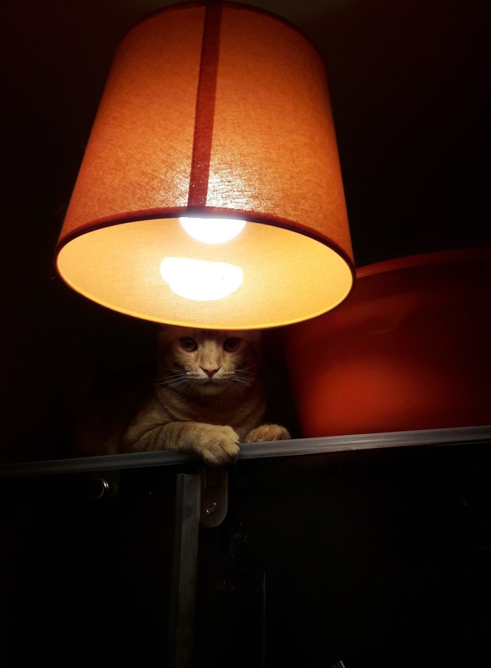 Кот с лампой из личной коллекции Кот с лампой, Кошкин дом, Кот