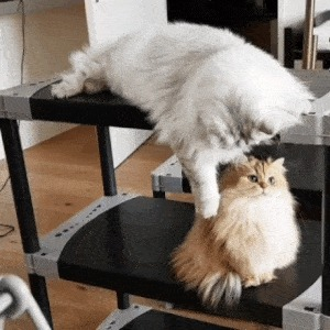 Кот против кота
