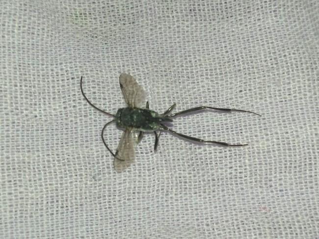 Сюрприз перед сном Биология, Энтомология, Энтомологи, Неопознанное насекомое, Домашнее насекомое, Насекомые