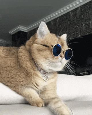 Кот Лепса