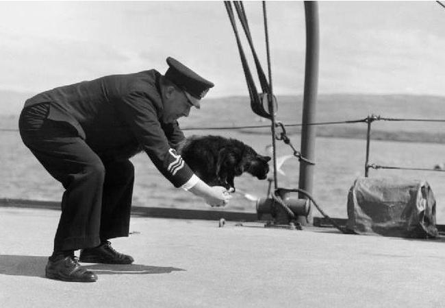 Корабельный кот, который пережил три кораблекрушения. Кот, Кораблекрушение, История, Картинка с текстом, Длиннопост