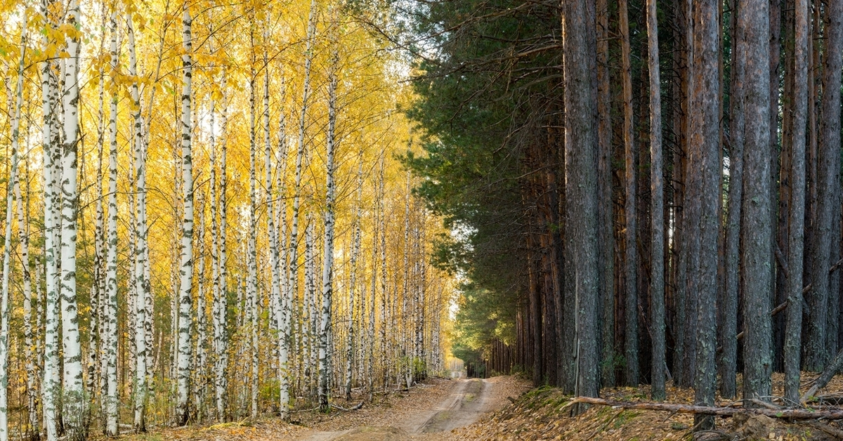 фотографии в заволжских лесах заказ калининграде так