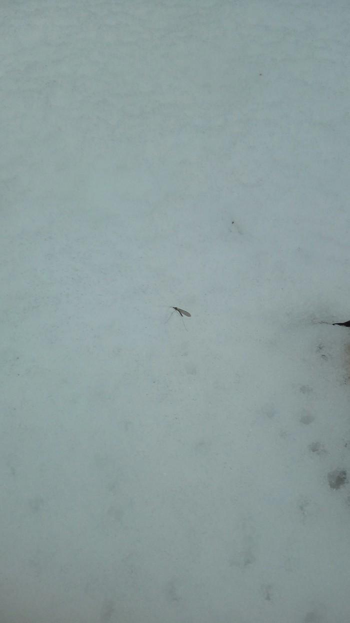 Зима,лес,комары Лес, Моё, Длиннопост