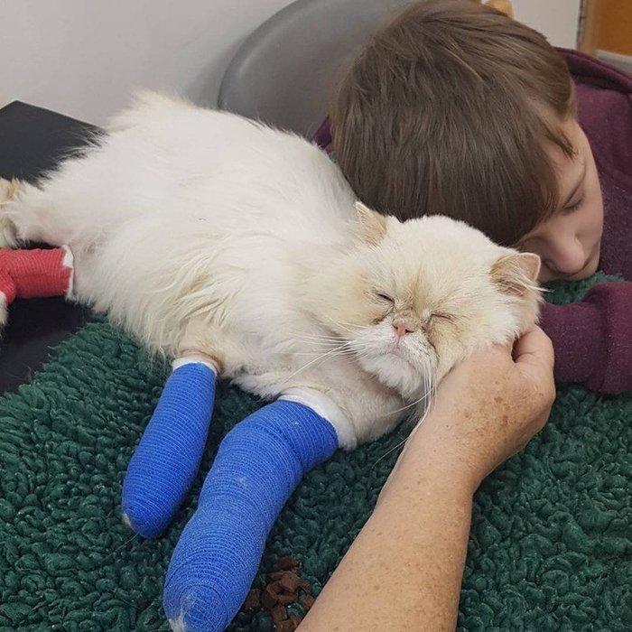 Кот, видя, что его мальчику плохо, собрал все свои силы и подполз к своему хозяину... любовь, кот, реальная история из жизни, Великобритания, забота, болезнь, спасение, видео, длиннопост