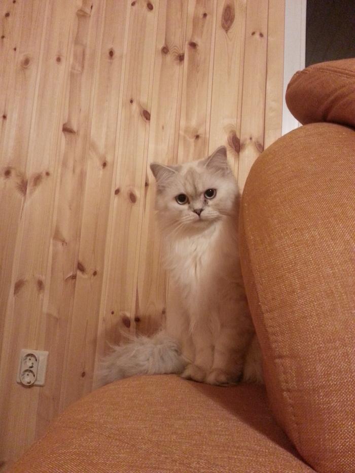 Кошачий алфавит Кот, Поза, Лапки, Пушистые лапки, Длиннопост