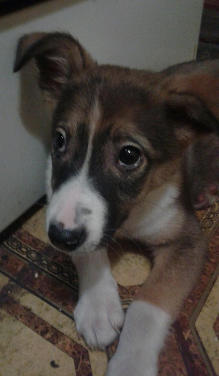 Помогите пристроить щенка. Запорожье.[Собака пристроена. Всем спасибо] Помощь, Щенки, Друг, Передержка, Длиннопост, В добрые руки