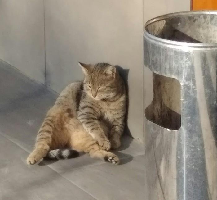 Понедельник - день тяжёлый. Кот, Моё
