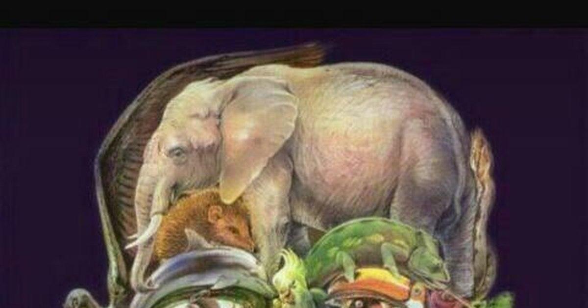 картинка из животных найди верблюда нет, есть мышцы