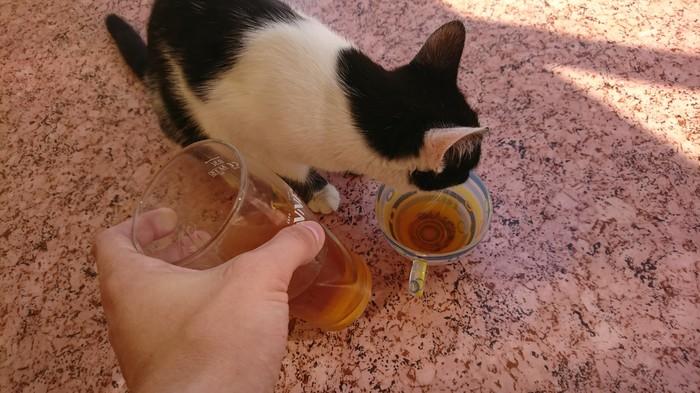 Когда кошка отбирает пиво. Кот, Юмор, Пиво, Прикол, Длиннопост