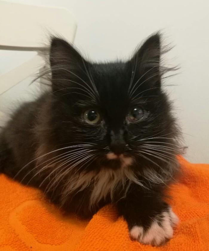 Сила Пикабу, помоги спаси котейку! Кот, В добрые руки, Беларусь, Минск, Длиннопост