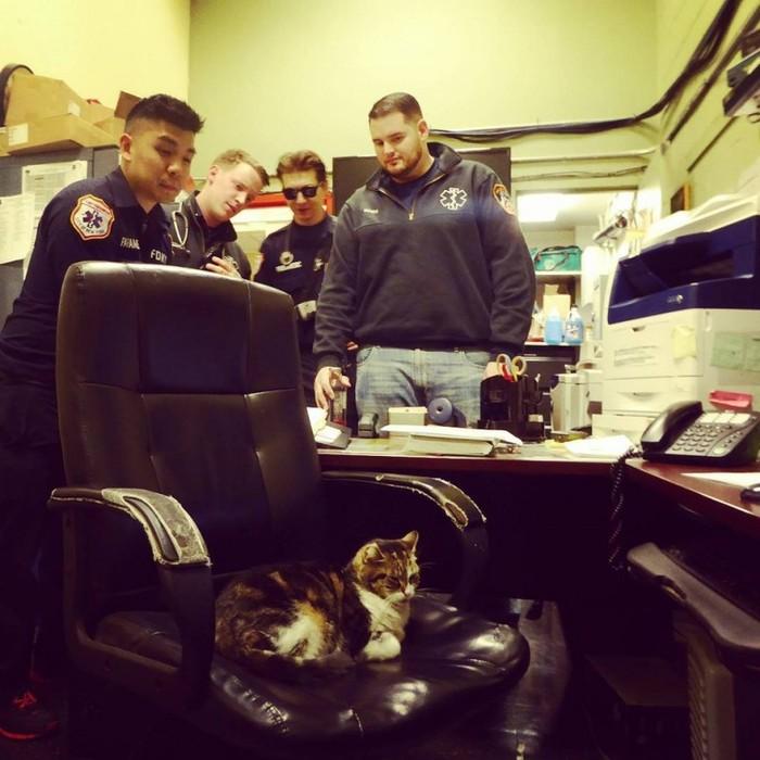 Два года назад маленький бело-полосатый котенок случайно забрел в нью-йоркскую пожарную станцию №57.. кот, пожарные, Нью-Йорк, длиннопост