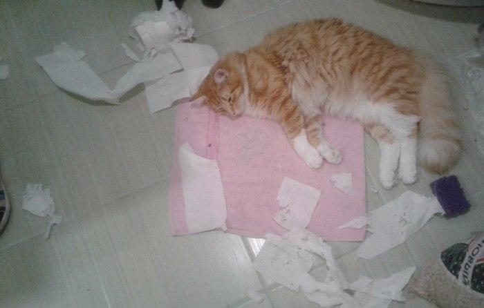 Жуткое нападение туалетной бумаги на котика Кот, Туалетная бумага, Фотография