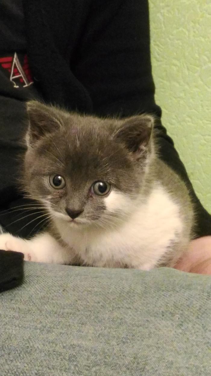Котики правят миром. Кот, Новый друг, Братья наши меньшие, Длиннопост