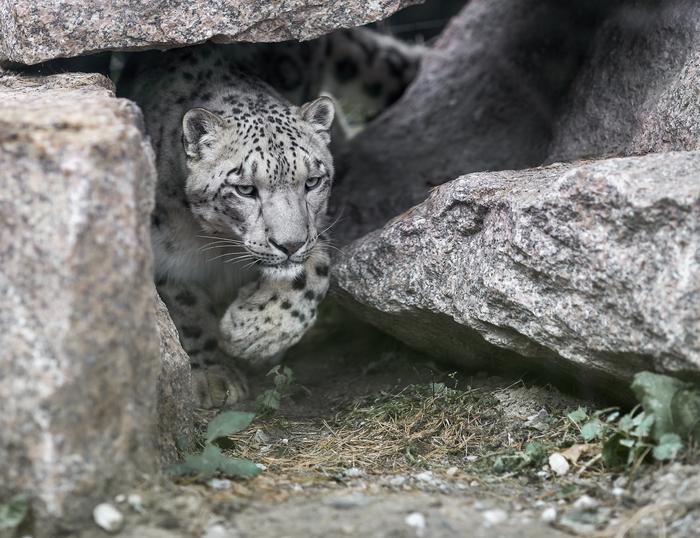 Челябинский зоопарк. Ответы на вопросы. Зоопарк, Животные, Дикие животные, Животные как люди, Ответ, Длиннопост