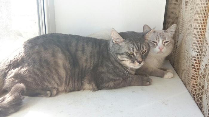 Мои котейки Кот, Фотография, Буся, Каспер, Длиннопост