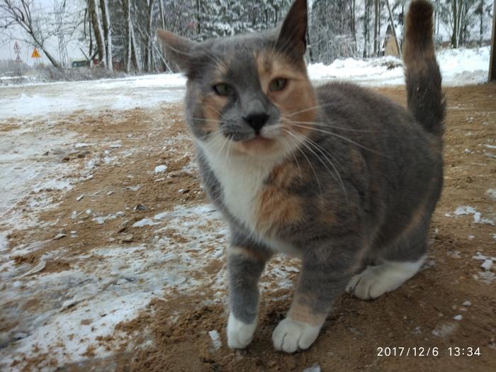 Разноцветные котики с овощебазы Кот, Ласка, Животные, Милота, Длиннопост
