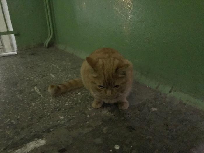 Найден рыжий кот в Екатерибурге (Уралмаш) Помощь, Помощь животным, Кот, Найдено, Потеряшка, Уралмаш, Екатеринбург, Длиннопост
