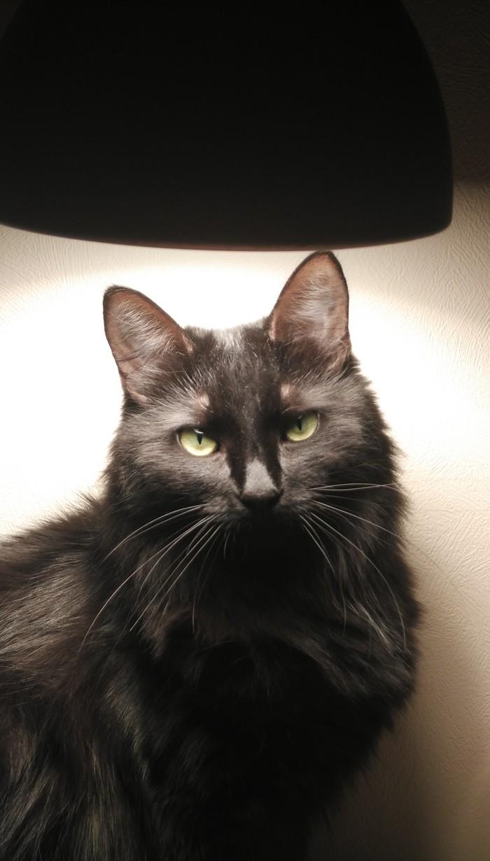 Кошка с лампой