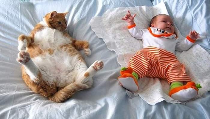 Двадцать пять доказательств, что коты могут спать везде! Кот, Фотография, Длиннопост, Юмор, Прикол, Собака, Милота