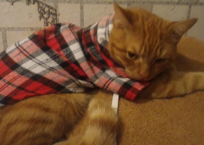 Когда мама покупает тебе одежду Кот, Рыжий, Недовольство, Смирение