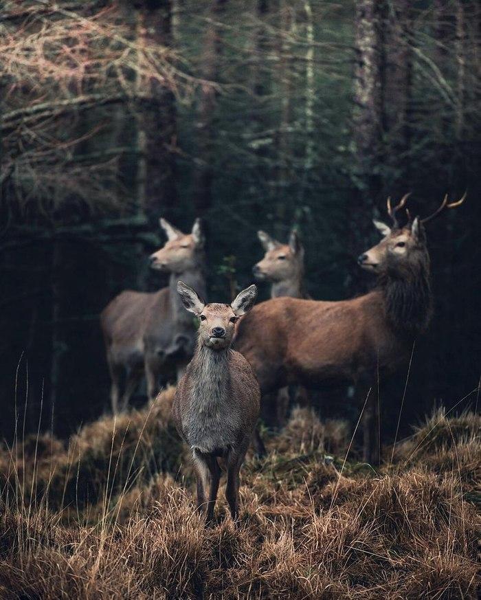 10 интересных фактов об оленях Олень, Животные, Природа, Длиннопост