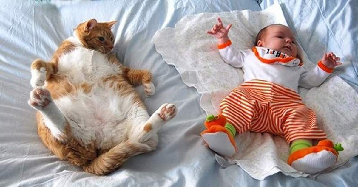 котики смешные спят фото до слез этой функцией
