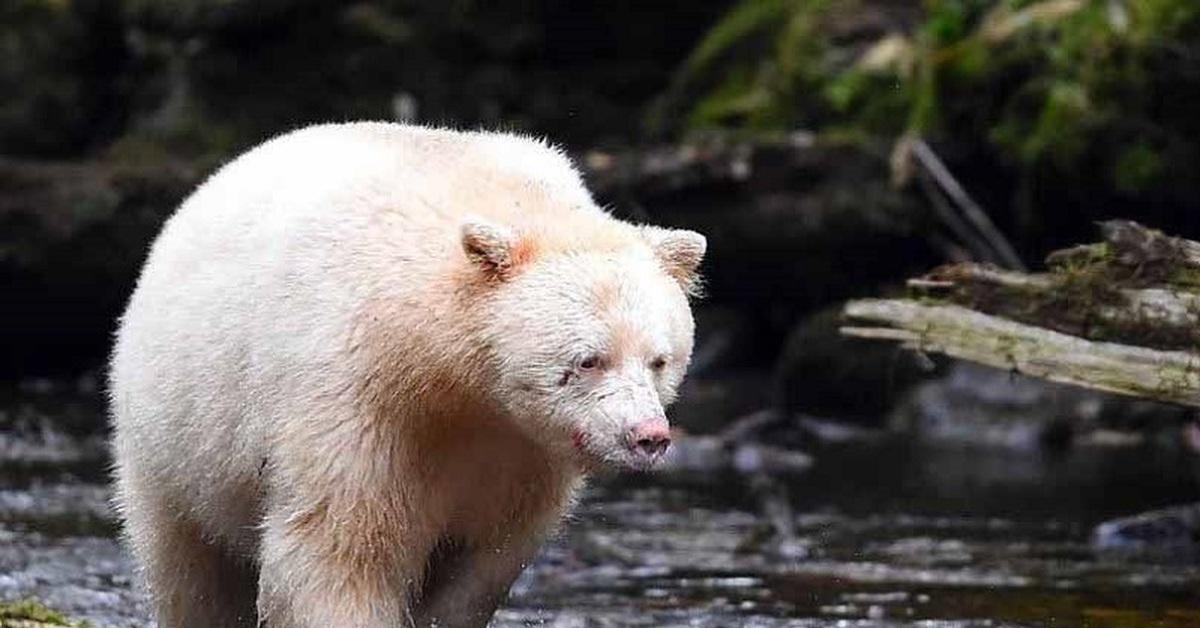 белый медведь альбинос фото общем-то, как мне