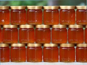 «Безумный мед» гималайских пчёл Мед, Неправильные пчелы, Галлюциногены, Отпустите меня в Гималаи