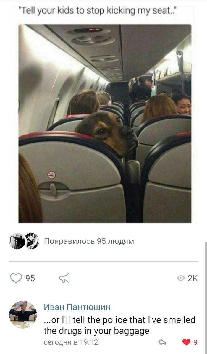 -Скажи своим детям, что бы они прекратили пинать мое кресло.. ВКонтакте, скриншот, Комментарии, Собака, самолет