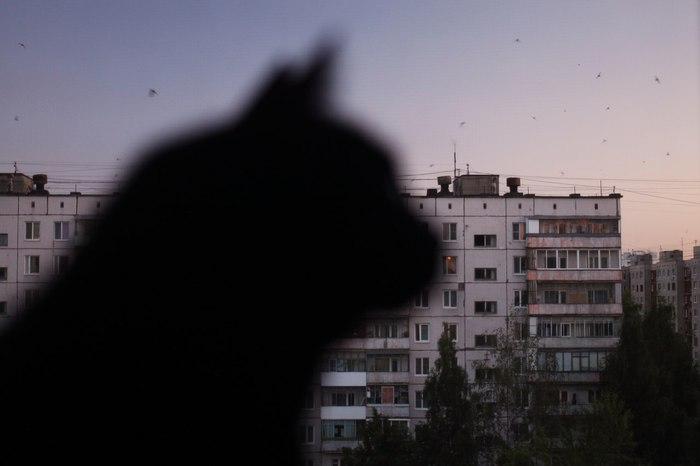 Призрак спального района