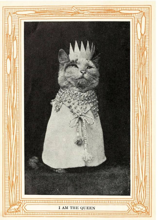 Мемы с котами до интернета [Перевод] Кот, Наркотики, Перевод, Старое, Длиннопост