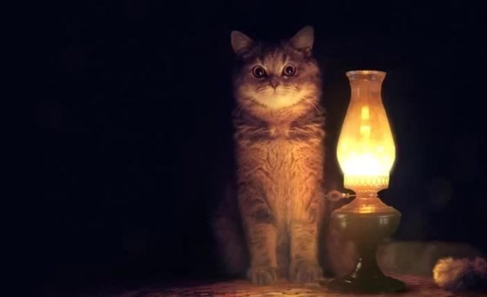 Я предложу, а вы там решайте! Кот, Лампа, Предложение, Длиннопост