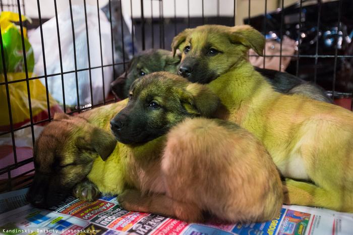 Томичи могут сдать пластиковые крышки, чтобы помочь бездомным животным Крышка, Зоозащитники