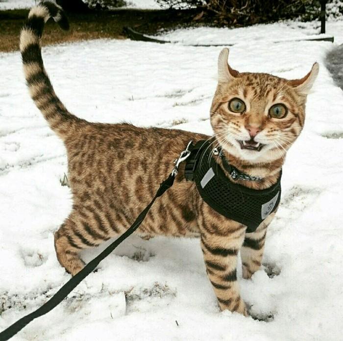 """""""Кошка моего друга сегодня в первый раз увидела снег"""""""