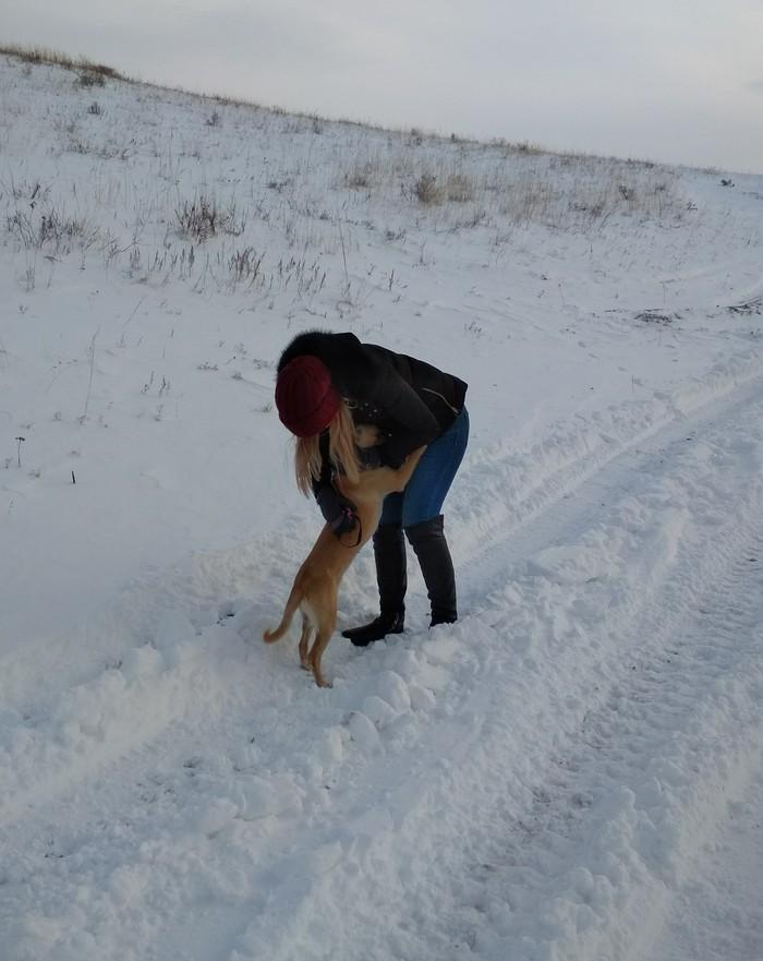 Как мы взяли собаку с улицы Собака, Животные, спасение животных, длиннопост