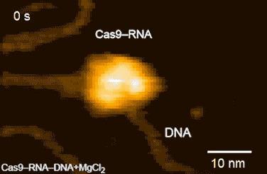 Ничего не обычного, просто CRISPR/Cas9 редактирует ДНК в реальном времени