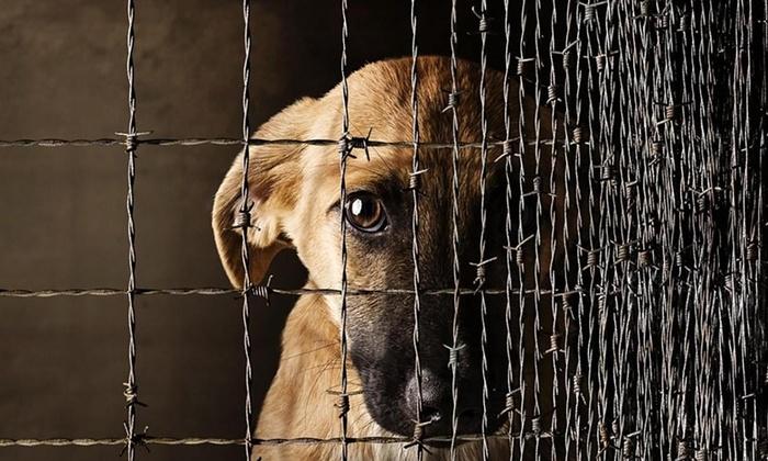 рейтинг чем грозит жестокое обращение с животными Баласс Год