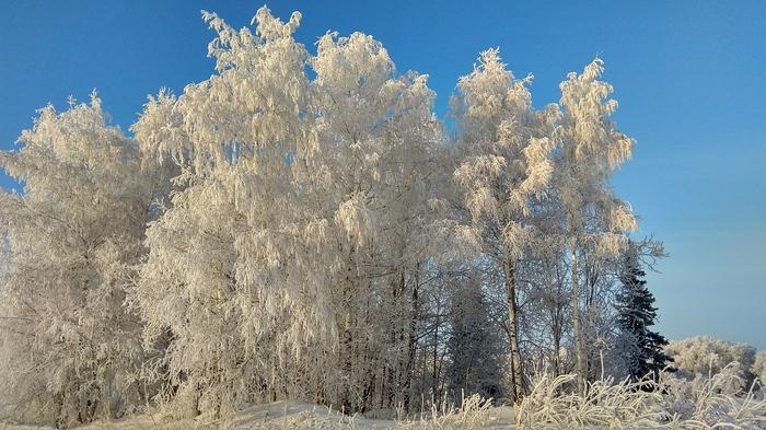 Мороз и солнце... Мороз, Зима, Иней, Солнце, Природа, Дерево, Длиннопост