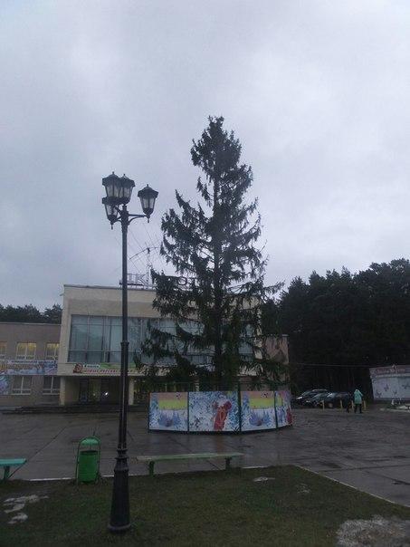 А у нас в городе елку поставили ёлка, новый год, лесная красавица, длиннопост