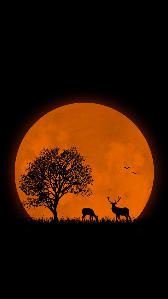 Олени на фоне луны Олень, Луна, Ночь, Красота, Обои